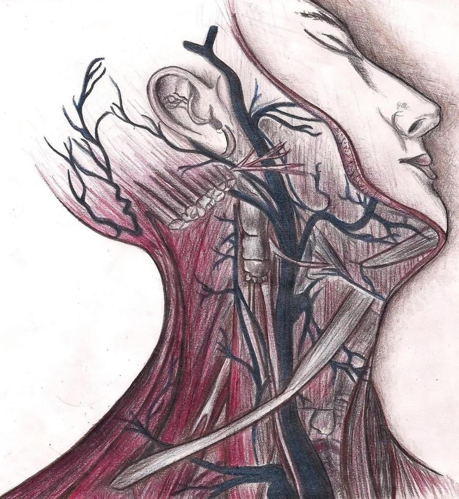 Grays Anatomy Wikipedia Mandegarfo