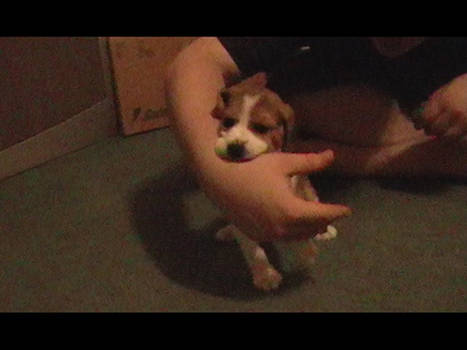 My Puppy Molly