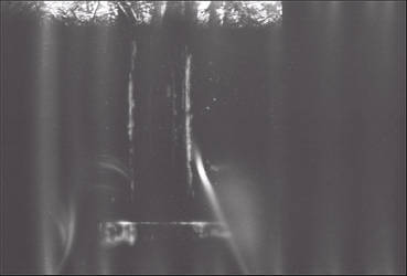 the tree window by ElusiveGnome