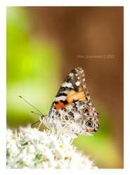 Butterfly I by Inguan