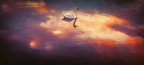 Morning swan by Inguan