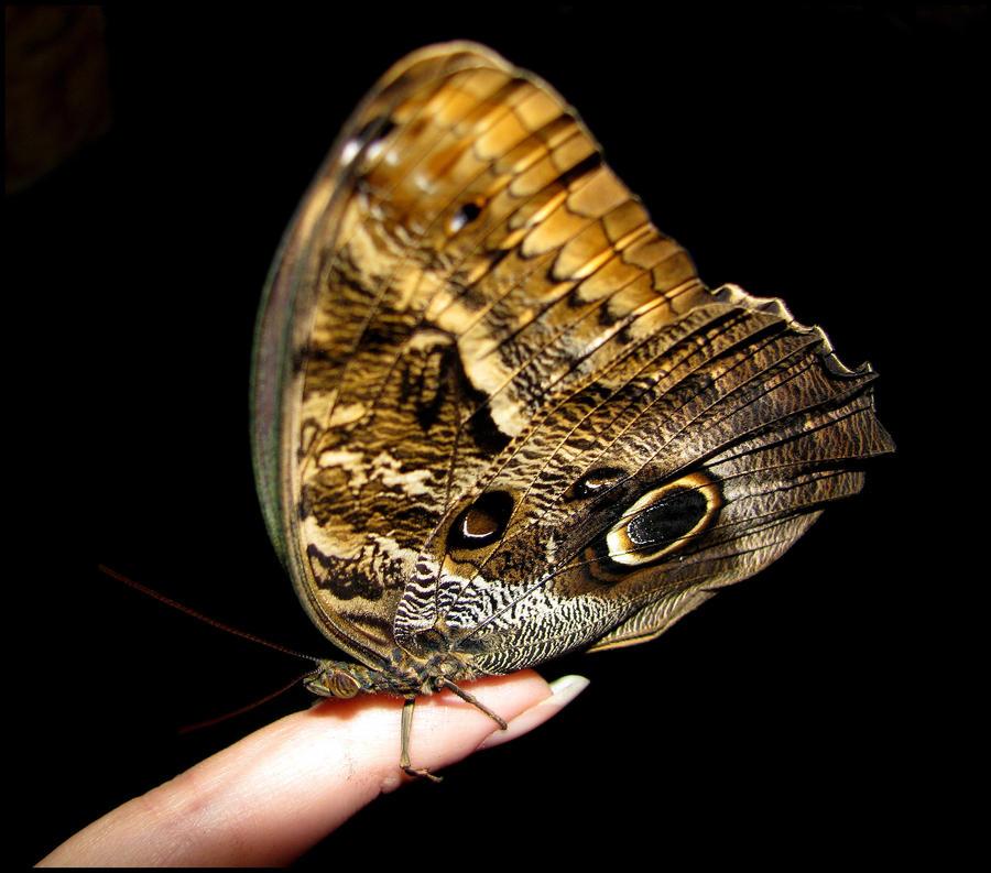 Talk:Madama Butterfly/Archive 1