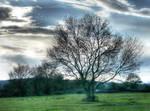 Tree 106 by nevit