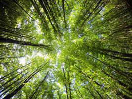 Trees 4074 by nevit