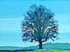 Tree 20180225 123057