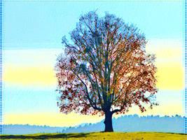 Tree 20180225 121554 by nevit