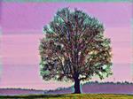 Tree 20180225 121541