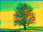 Tree 20180225 121517