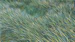 Artserdam Renewal 20180618 021627 grass