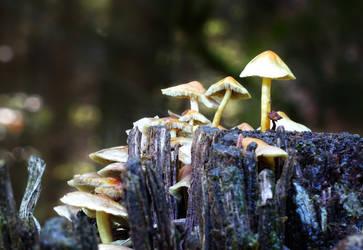 Enchanted mushroom family
