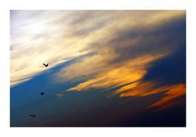 ..:3Birds:.. by butterflyscream