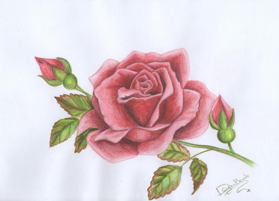 Drawing red rose by littlefantasydragon on DeviantArt