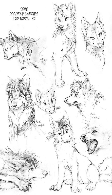 Wolf Sketches By TamberElla On DeviantArt