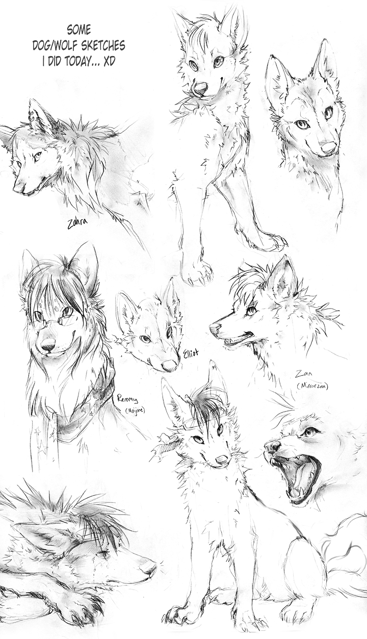 Wolf Sketches by TamberElla