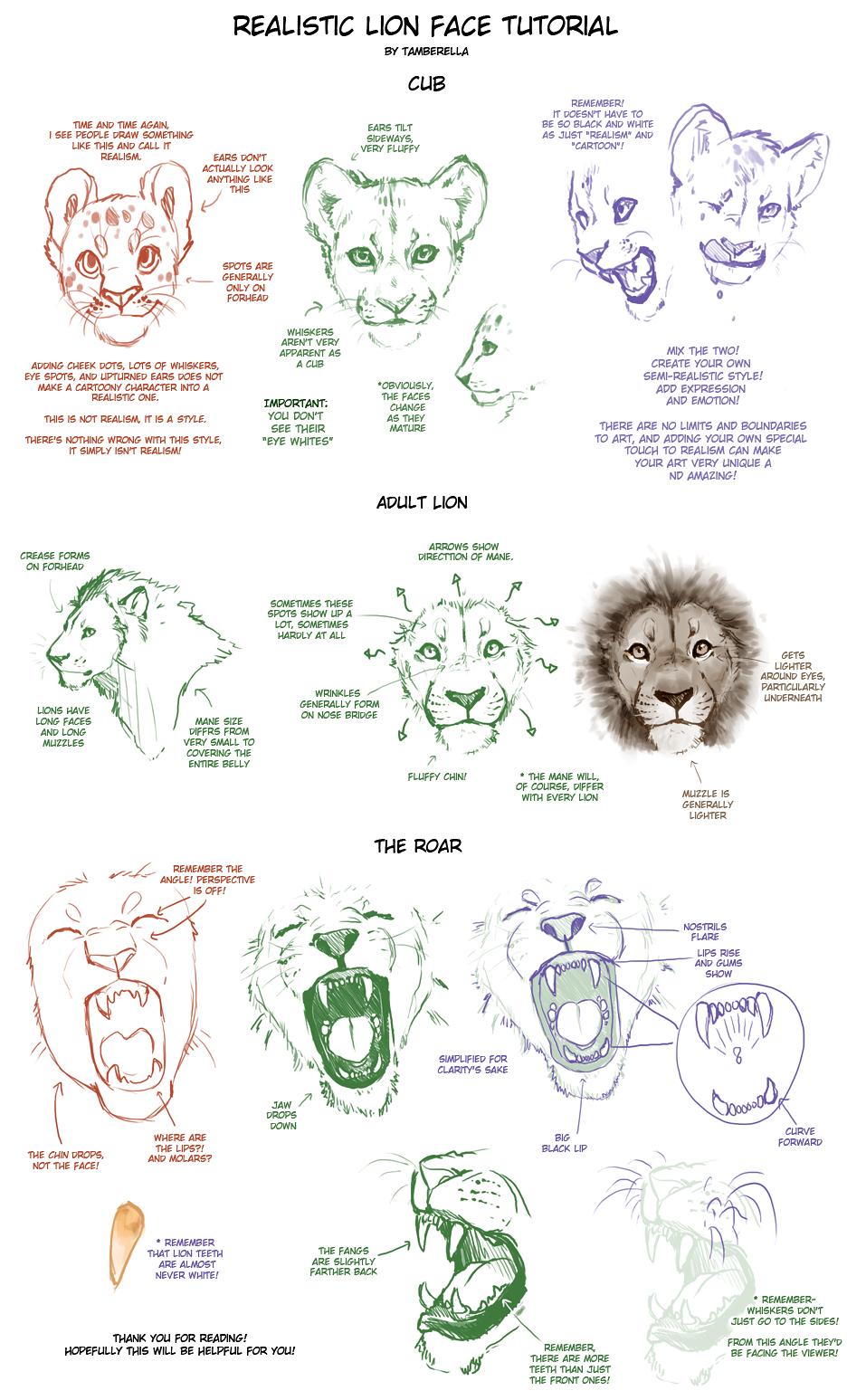 Realistic Lion Face