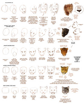 OLD: How to Draw Big Cats Part 1
