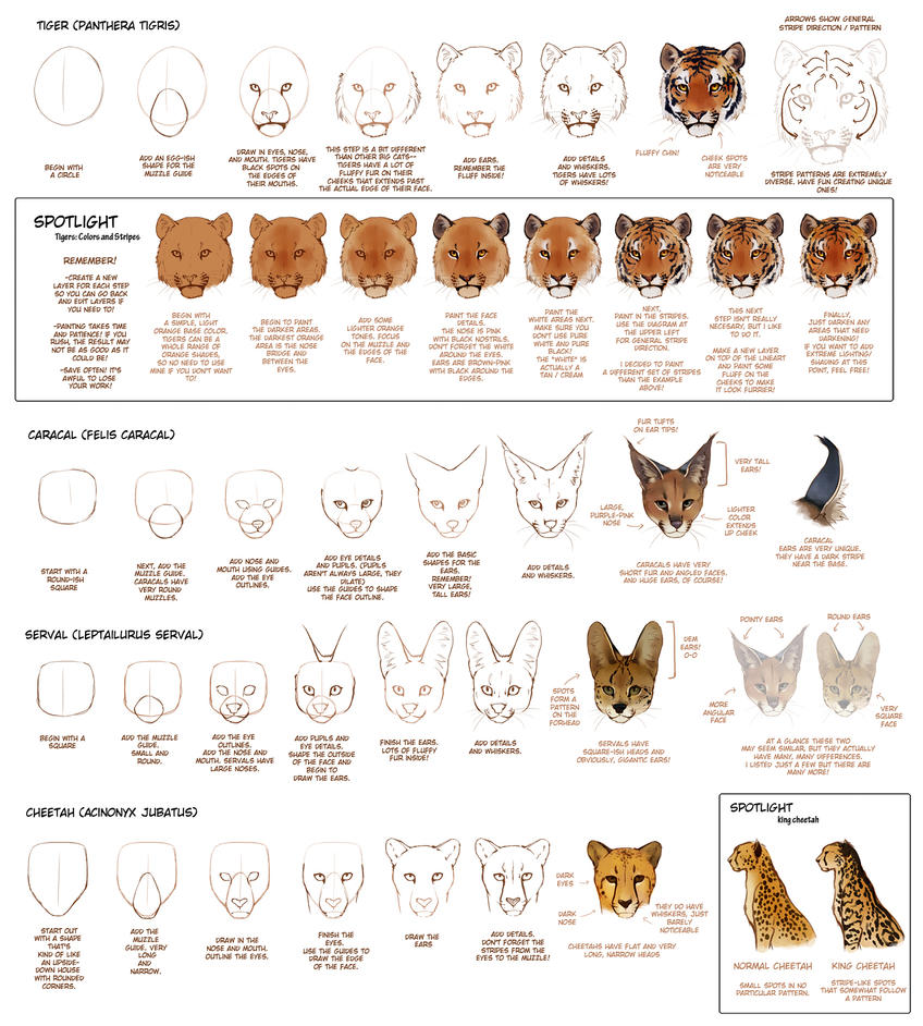 How To Draw Big Cats Part 2 by TamberElla on DeviantArt