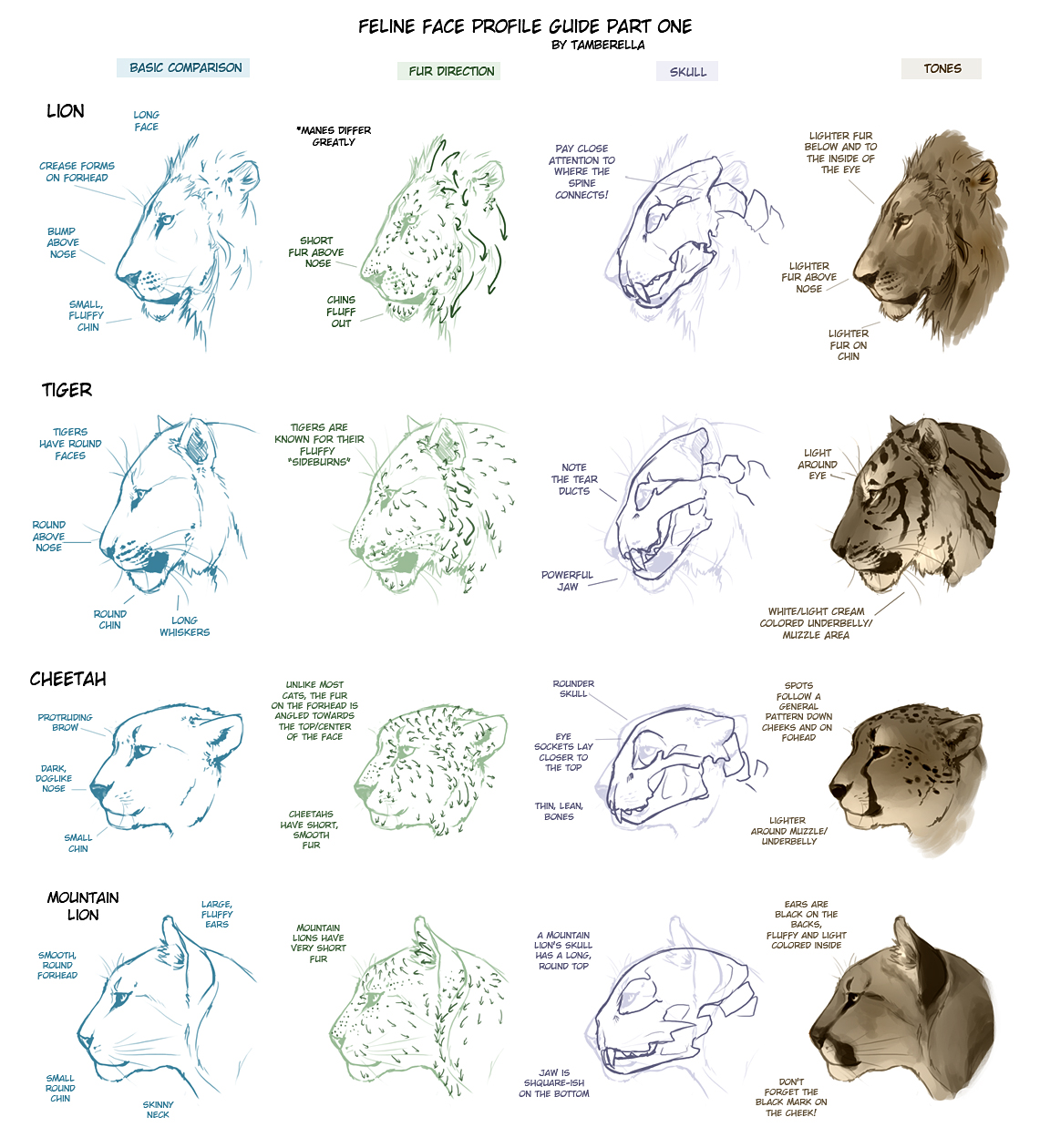 Feline Face Profile Tutorial 1 by TamberElla