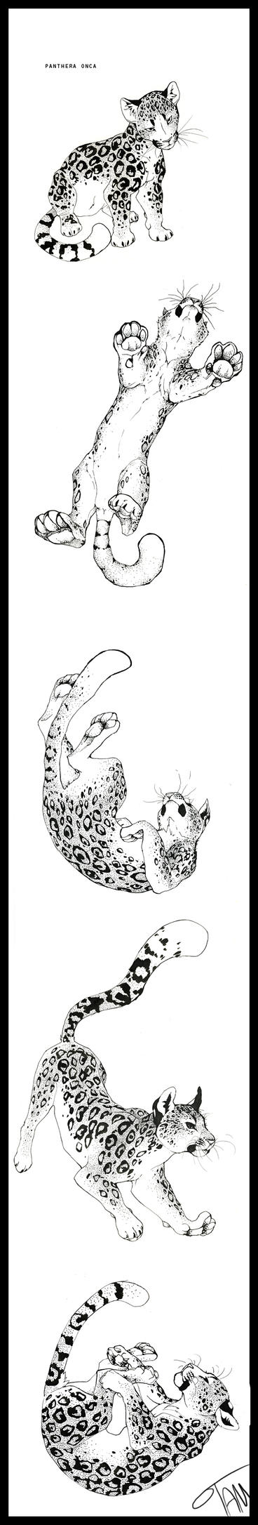 Panthera Onca by TamberElla