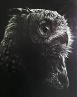 Owl Scratchboard AUCTION
