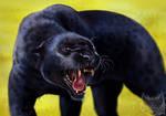Catamancer Black Panther