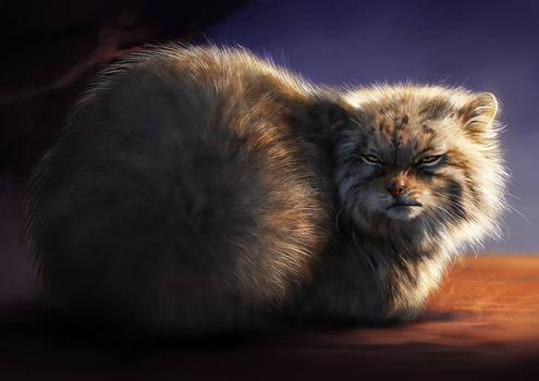 Catamancer Pallas Cat