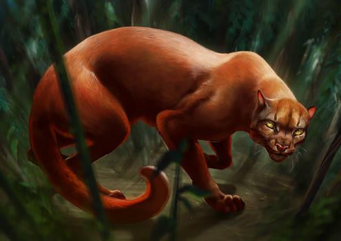 Catamancer Bay Cat