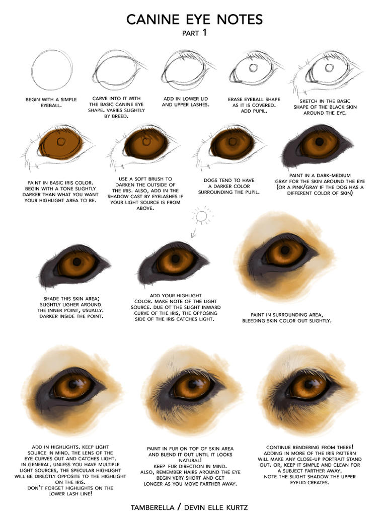 Canine Eye Notes pt 1 by TamberElla on DeviantArt