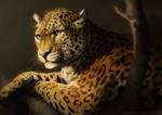 Catamancer Leopard