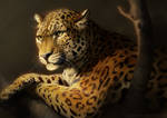 Catamancer Leopard