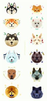 Spitz Pups