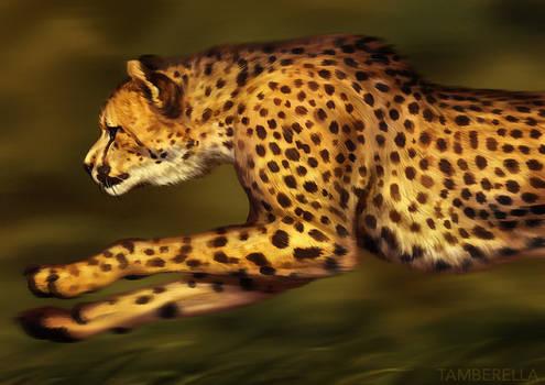 Catamancer Cheetah
