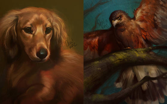 Experimental Pet Portraits