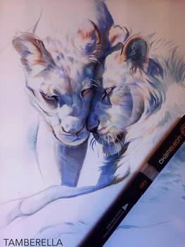 Sweet Lions