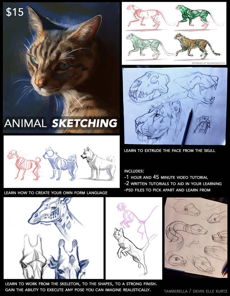 Animal Sketching Tutorial