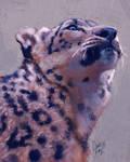 Snow Leopard Experiment