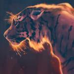 Starry Tiger