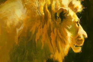 Lion light study July 23