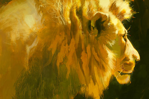 Lion light study July 23