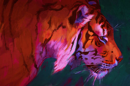 TigerAug2019