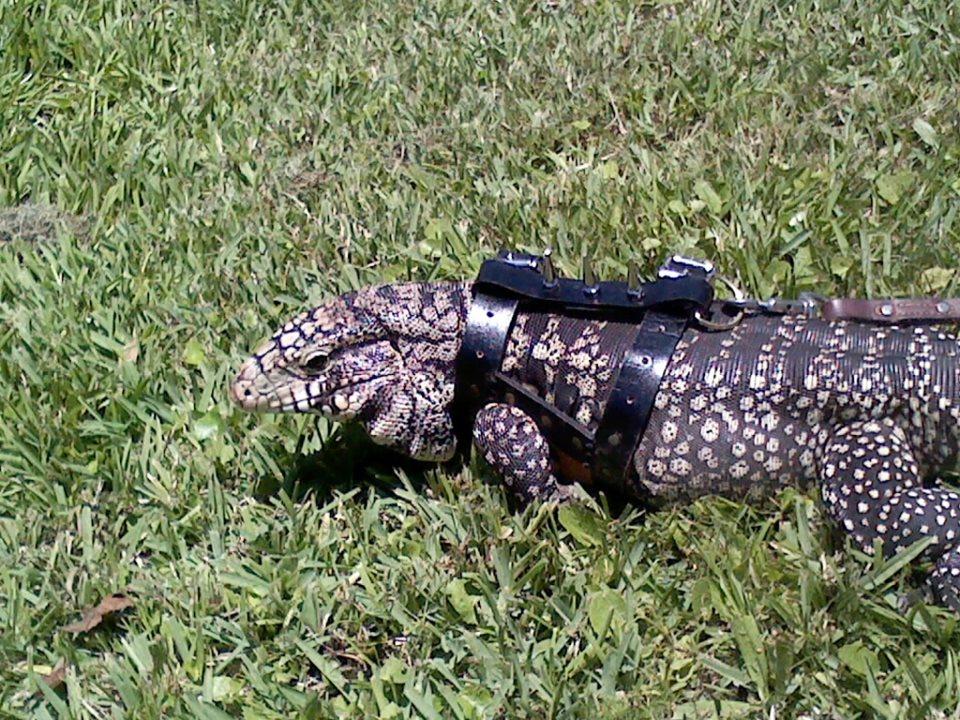 Lizard Harness 5 by Spudfl on DeviantArt