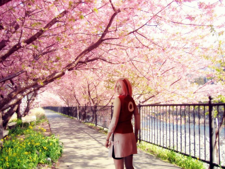 Sakura - My way by TemeSasu