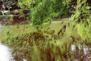 Zen Garden by Adrien-Fish