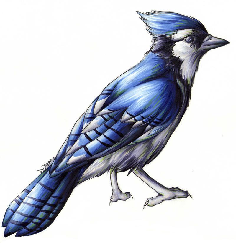 Blue Jay By Blazheirio889 On DeviantArt