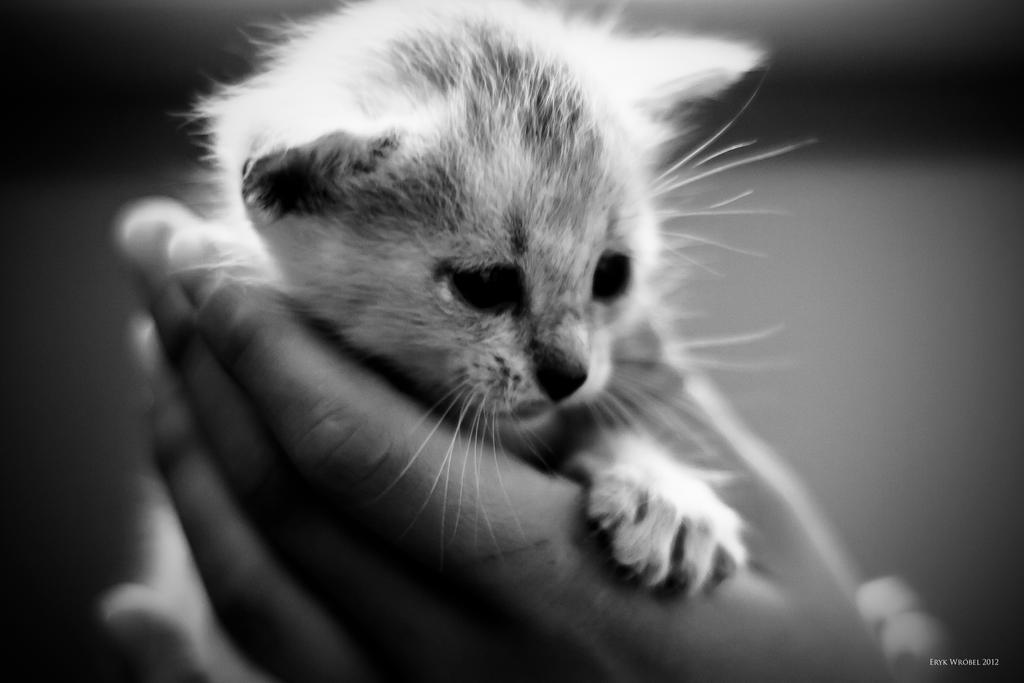 Cute Little Cat by hakeryk2