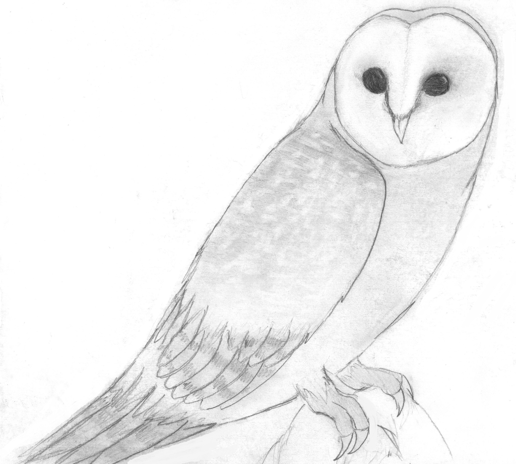 Barn owl by SapphireClaw on DeviantArt