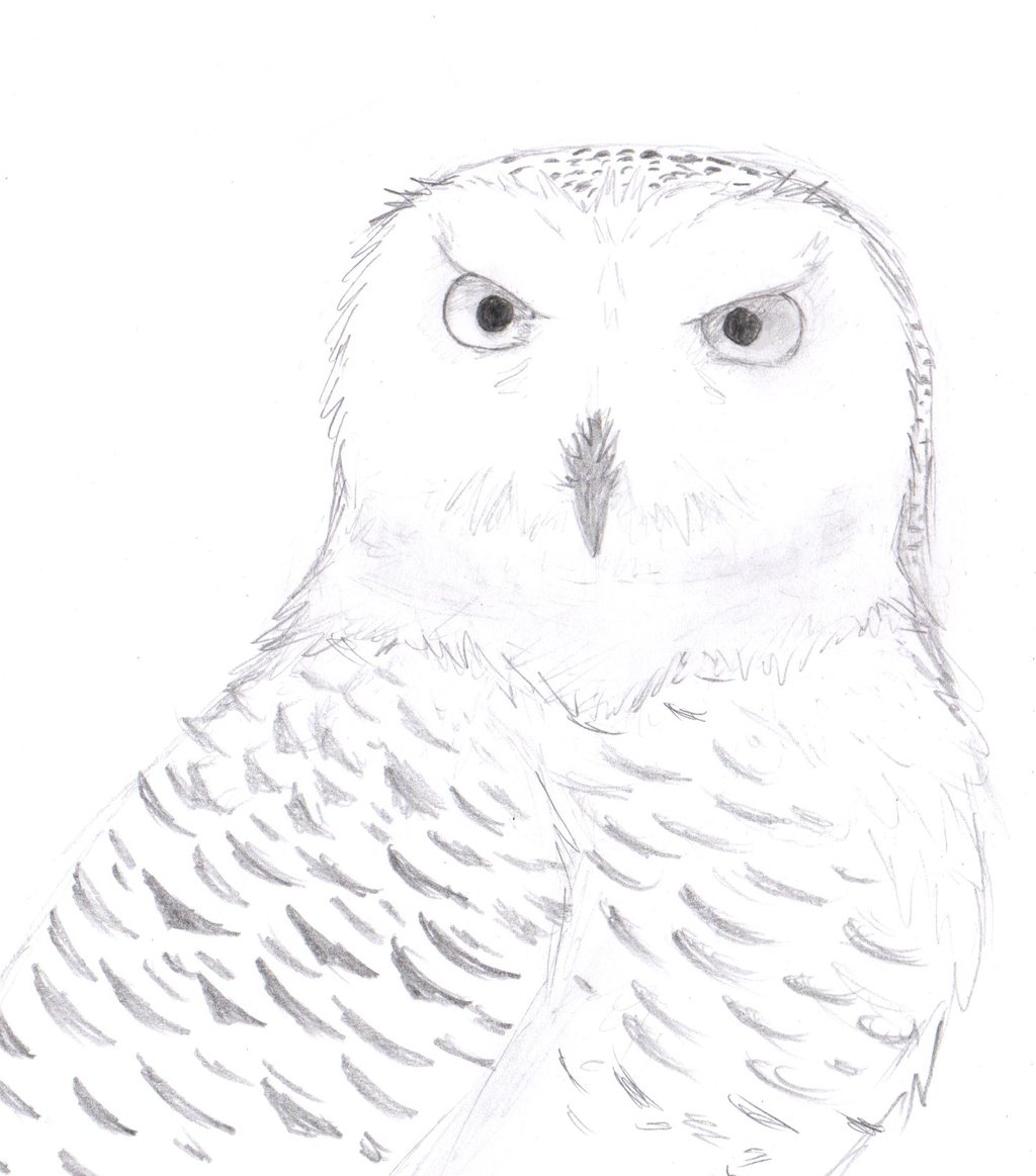 Snowy owl by sapphireclaw on deviantart for Draw the owl