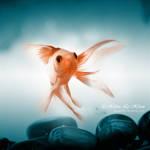 swiming in the wind by kim-e-sens