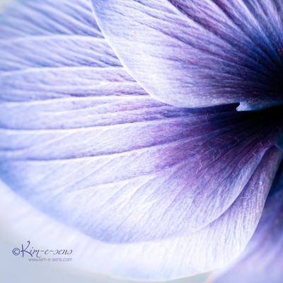 Blue tissue by kim-e-sens
