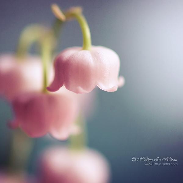 Magic bells by kim-e-sens